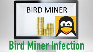 Bird Miner Infection